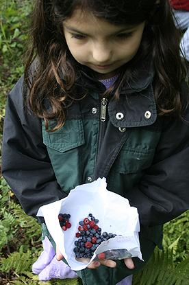 blueberry-picking.jpg